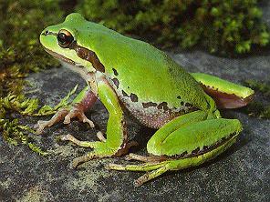 What are the five classes of vertebrates?