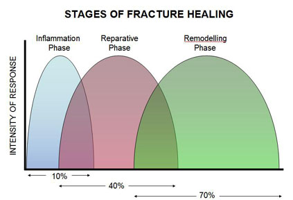 stages_fracture_healing2A.jpg